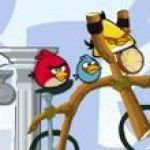 Angry Bird lái xe