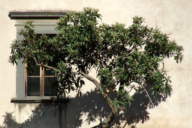 Tree in Sicily by Djacoby.
