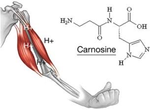 physiological-arm-right-alanine