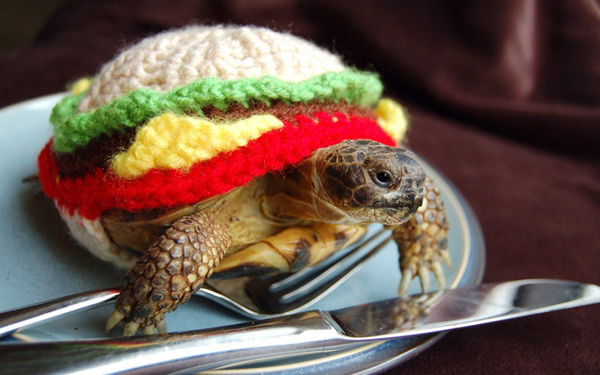 tortoise in sweaters