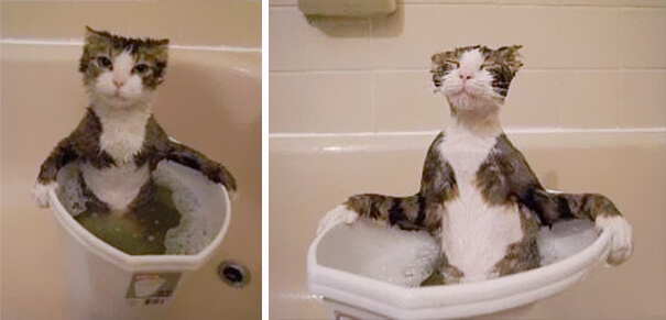 pisica-careia-ii-place-sa-faca-baie