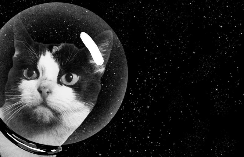 Félicette, prima pisica trimisa in spatiu