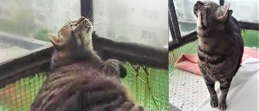 motanul caruia ii place sa vorbeasca cu pasarelele