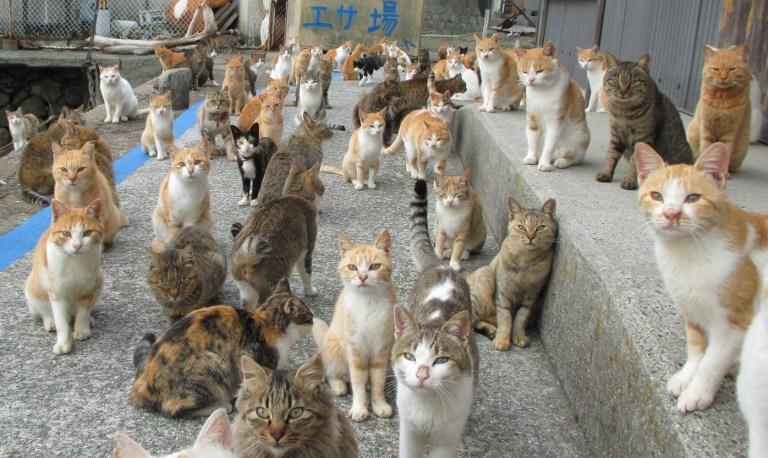 multe_pisici