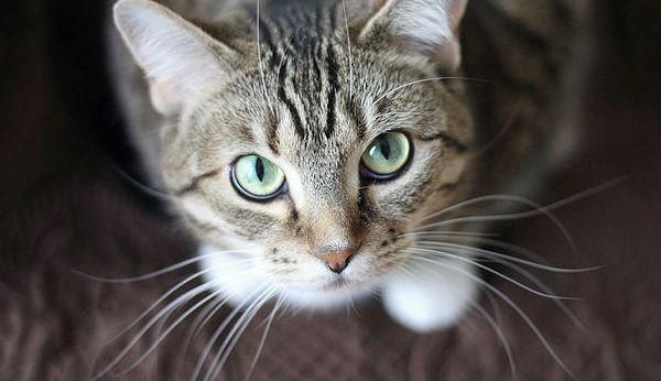 mustatile pisicilor