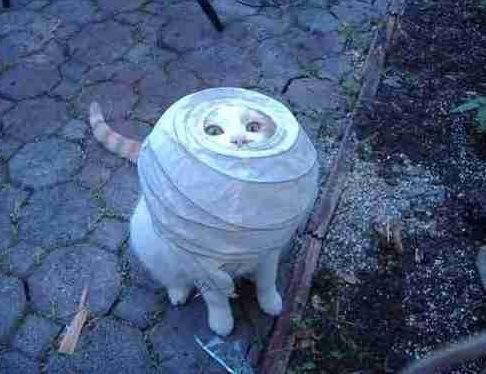 pisica_haioasa_blocata_in lampion