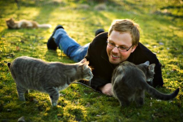 cum sunt pisicile strigate in alte tari