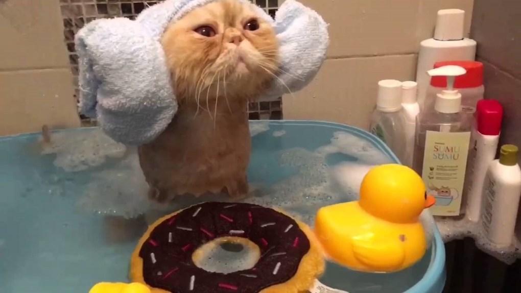 de ce trebuie sa ii faci baie pisicii