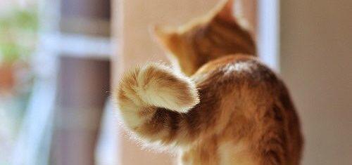 codita pisicilor