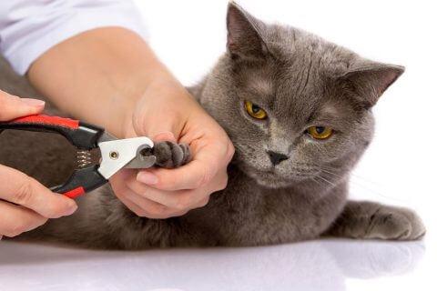 taiatul gherutelor la pisici