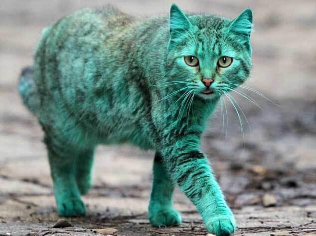 pisica verde