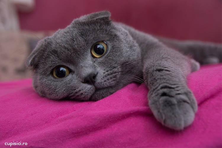 personalitatea pisicii