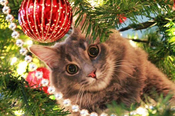 pisica departe de bradul de craciun