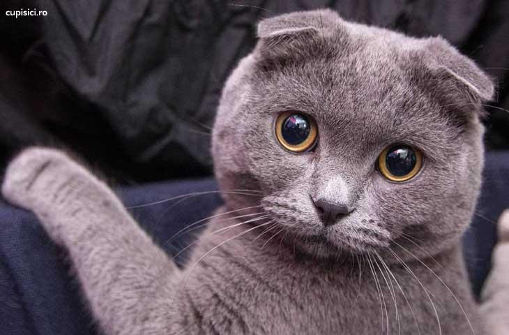 pisicuta care ti se potriveste