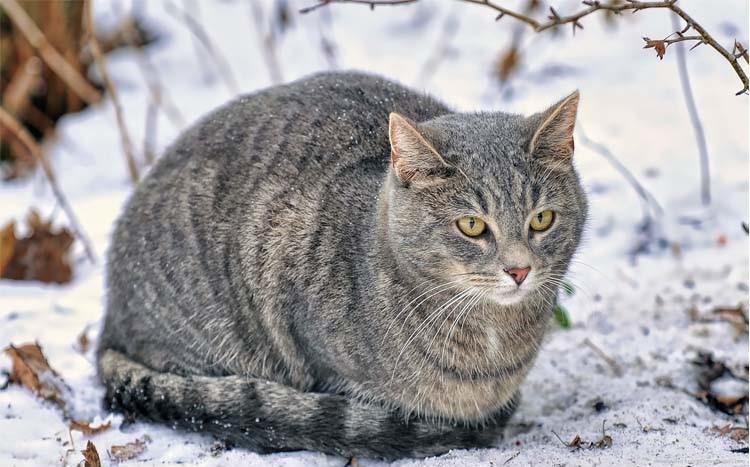 ajuta pisicile strazii in sezonul rece