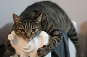 pisicilor le place caldura
