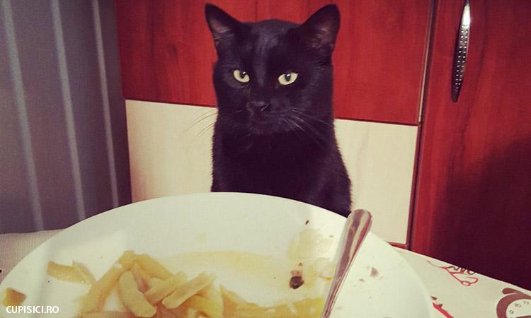 alimente daunatoare pentru pisica