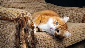 inveti pisica sa nu zgarie mobila