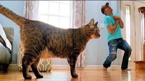 Un barbat a decis sa se prefaca mort in fata pisicii lui.