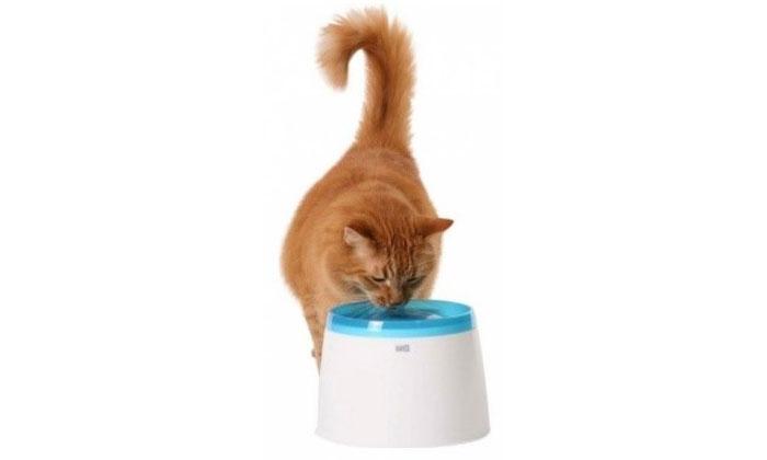 alimentatia sanatoasa a pisicii