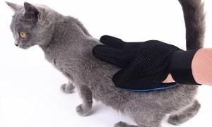 periezi blana pisicii tale