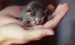 puii de pisica nou-nascuti