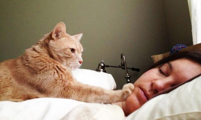 pisica nu te lasa sa dormi
