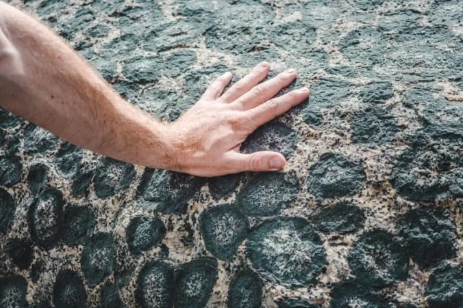 rare rock granite orbicular Caldera Copiapo Chile geology leopard rock