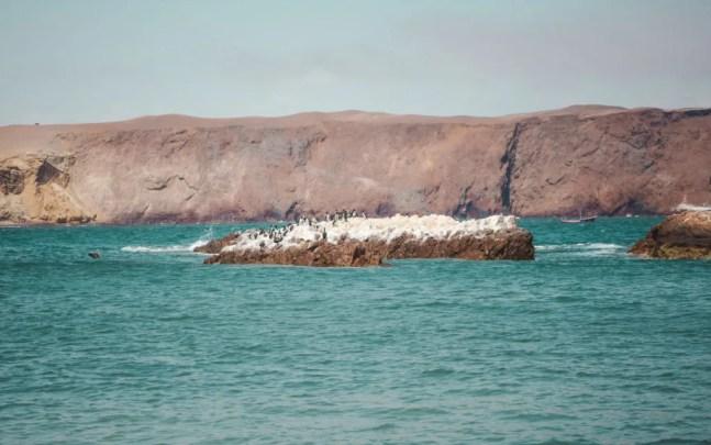 Isla de Balletas tours from Paracas poor man's galapagos peru