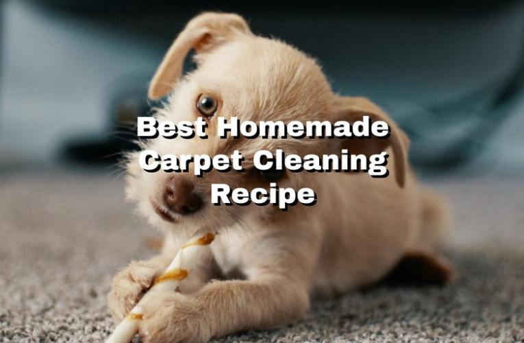 Best Homemade Carpet Cleaning Recipe