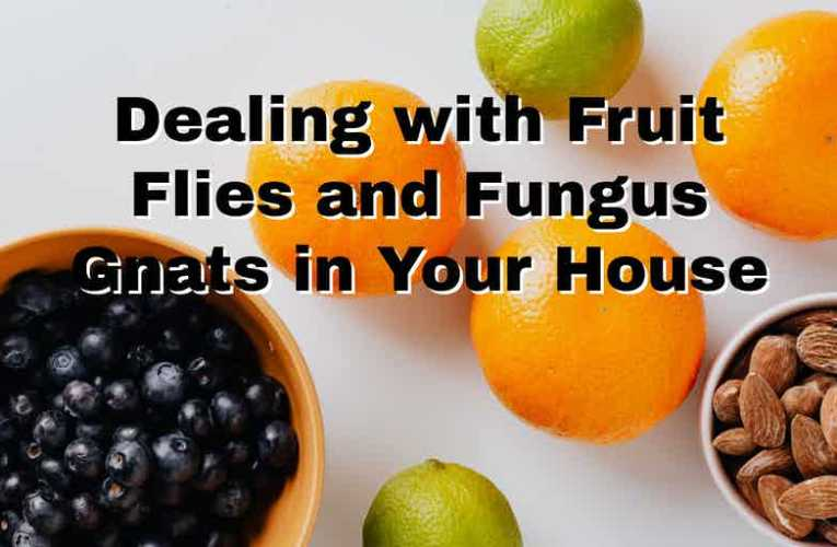 Dealing with Fruit Flies and Fungus Gnats in Your House