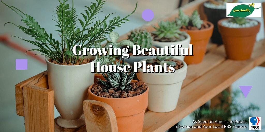 houseplants on a shelf