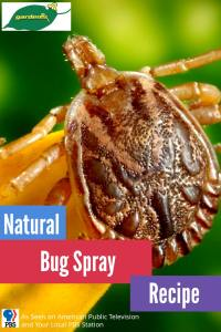 Natural Bug Spray Recipe 1