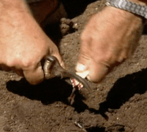 Adding Sulfur to Your Soil 2