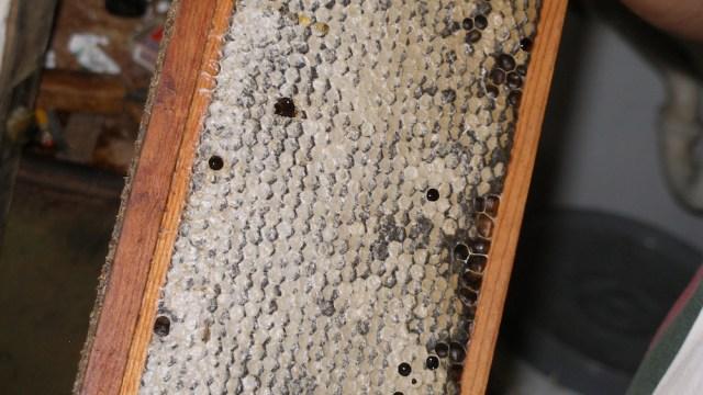 Honey Bees and Honey 4
