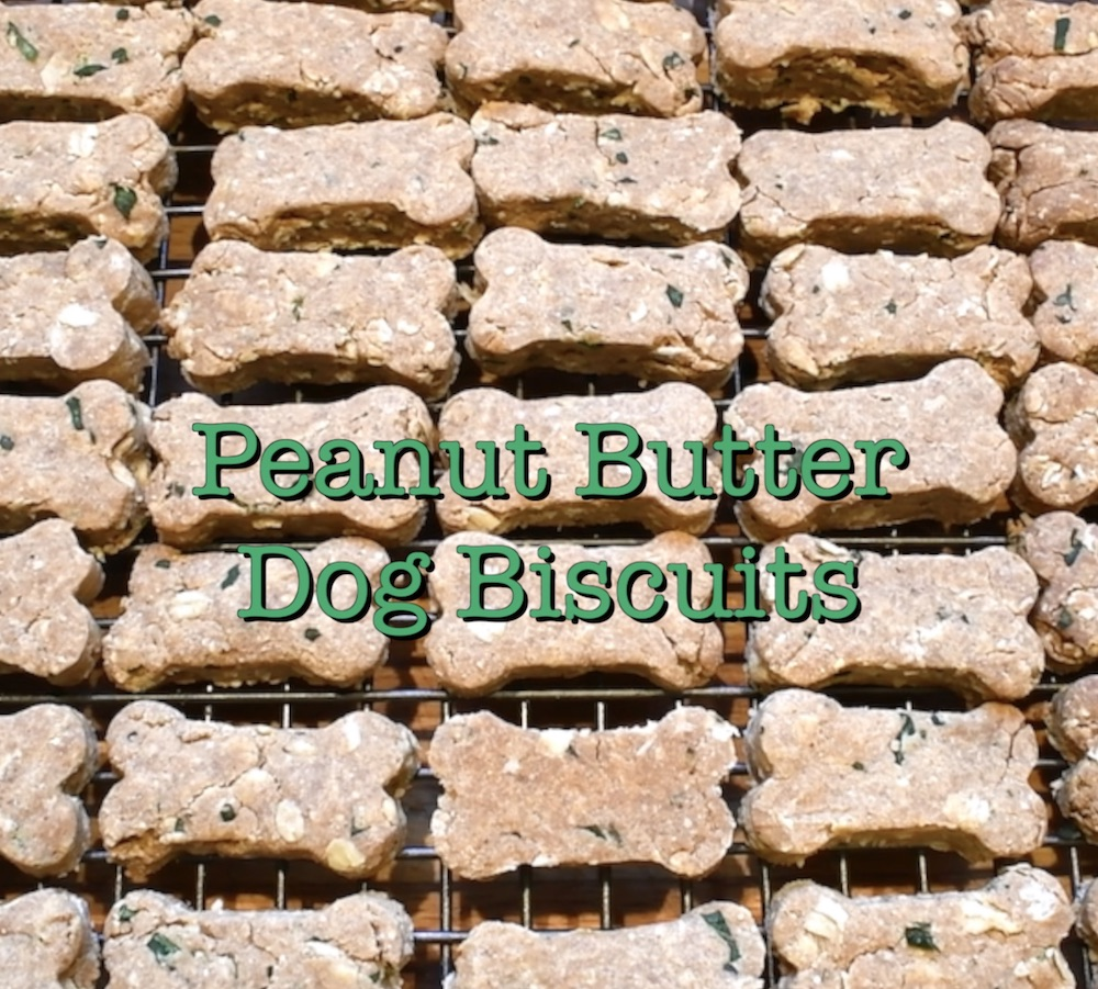 Peanut-butter-dog-biscuit