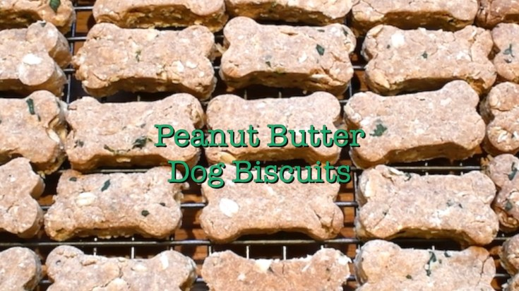 I never met a dog that didn't love peanut butter and this furry friend dog biscuit recipe is organic, healthy, tasty and a guaranteed hit with your pet pooch.