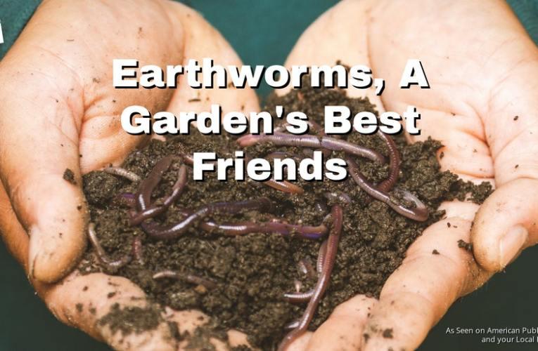 Earthworms – A Garden's Best Friends