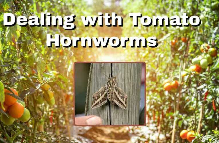 GardenRx: Dealing with Tomato Hornworms