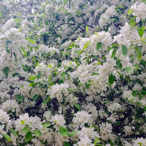 fleurs-budapest