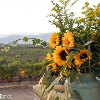 Checklist for a Weekend in Valle de Guadalupe