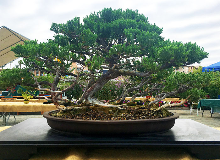 6 Things Every Good Marriage Bonsai Need Curated Faith