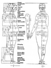 Durer A., Studies on proportions of the female body, 1528