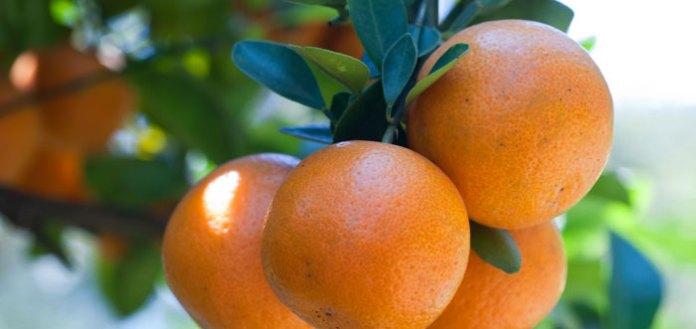 15 Juicy Reasons To Make Orange Your Daily Breakfast Fruit.