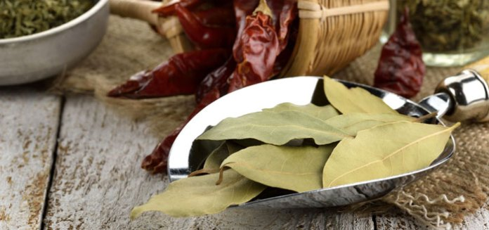 20 Reasons Why Bay Leaf Is More A Herb Than A Spice.
