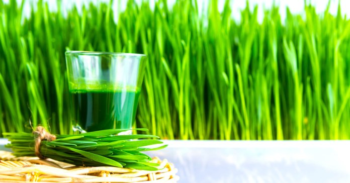 The Healthy Shot You Need Today Wheatgrass