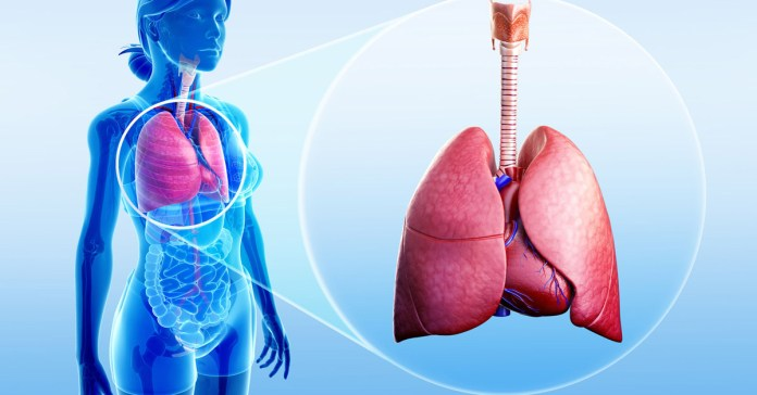 How To Detoxify Your Lungs After Quitting Smoke?