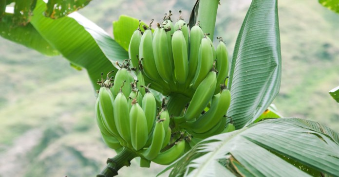 For Better Health, Resist Monoculture