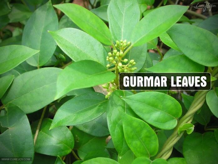 Gurmar-Leaves