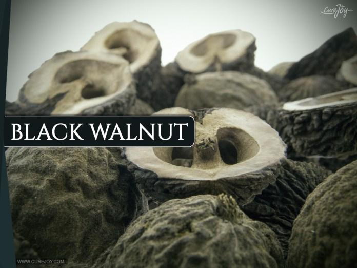 Black-Walnut: Best Super Foods For Thyroid Health